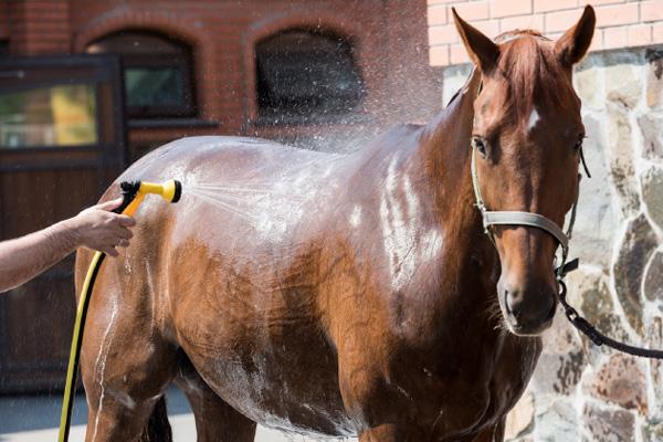 Horse at yard